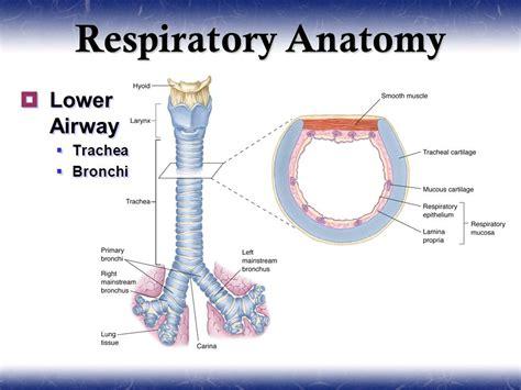 pulmonology  video