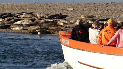 Beans Boats by Blakeney Seal Trips With Beans Boats