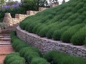 Hang Bepflanzen Pflegeleicht : hangbepflanzung planen welche bodendecker eignen sich ~ Lizthompson.info Haus und Dekorationen