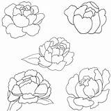 Peony Coloring Pages Patterns sketch template