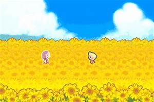 sunflower field on Tumblr