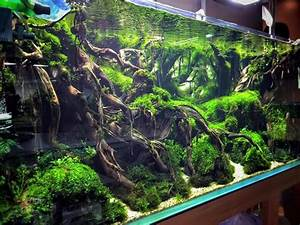 Aquascaping: a collection of ideas to try about Art Fish