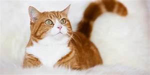 Site De Discussion : tout pour mon chat le site officiel du chat ~ Medecine-chirurgie-esthetiques.com Avis de Voitures