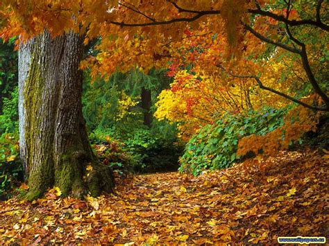 Rv Country Fall Foliage You'll Fall In Love With