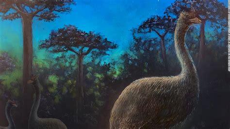 elephant birds  blind nocturnal  taller  big