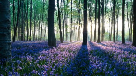 dawn  forest wallpapers hd wallpapers id