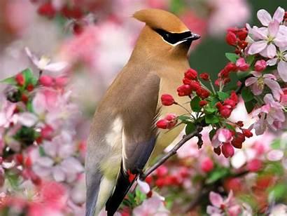 Birds Bird Wallpapers Single Spring Lovely Desktop