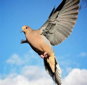 Dove | 20 Beautiful Pictures of Doves - SloDive | Dove ...