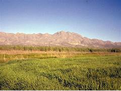 Temperate Grasslands -...