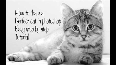 draw  realistic cat easy photoshop tutorial youtube
