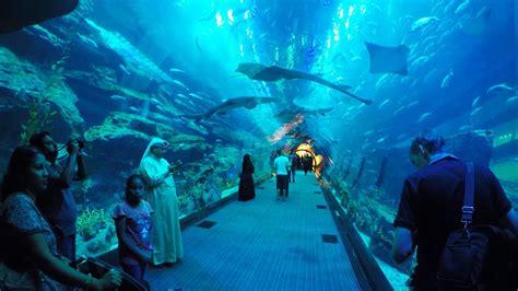Dubai Aquarium & Underwater Zoo, Akwarium W Dubaju