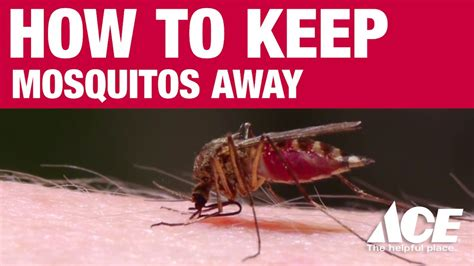 what helps keep mosquitoes away how to keep mosquitoes away ace hardware youtube