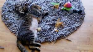 Puzzle Rug For Cats by Cat Play Rug Rugs Ideas