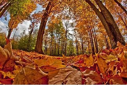 Fall Foliage Pa Pennsylvania Trip Wilds