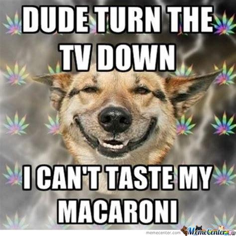 High Dog Meme - marijuana dog memes best collection of funny marijuana dog pictures
