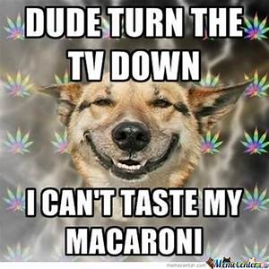 Marijuana Dog Memes. Best Collection of Funny Marijuana ...