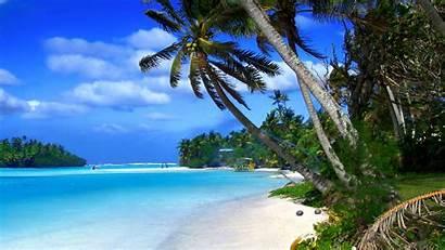 Palm Trees Tropical Beach Ocean Water Cayman