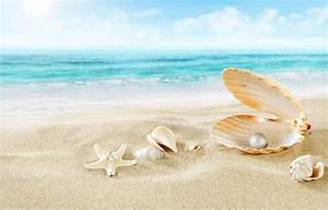 Wallpaper starfish, nature, beach, shell, pearl, sea, sand ...