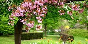 Flower Garden Wallpaper Background - Interior Design