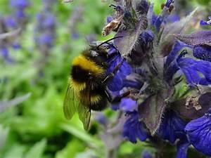 Wie Vertreibe Ich Wespen : wie entferne ich ein wespennest der ungebetene gast wie ~ Orissabook.com Haus und Dekorationen