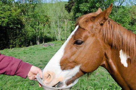 horses diabetes horse health