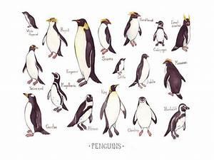 Penguins (Spheniscidae) - YouTube