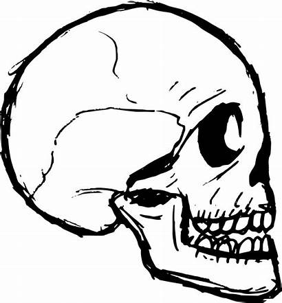 Skull Drawing Transparent Vector Svg Onlygfx Px