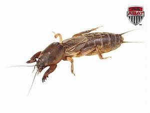 Insecte De Maison : insectes ~ Melissatoandfro.com Idées de Décoration