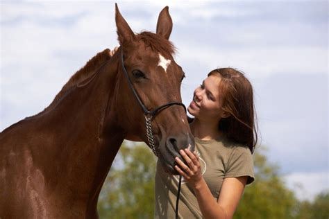 horse pet pets living holding equine buying avoid discover info