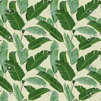 Seamless Banana Leaves Texture Textures Patterns