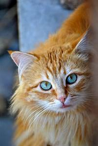 look at me...European red hair | CATS | Pinterest
