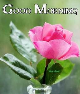 Good Morning Wishes With Flowers Pictures, Images - Page 36