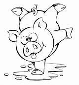 Pig Coloring Pigs Toddlers sketch template