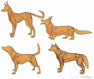 Dog Anatomy Drawing At Getdrawings