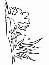 Seaweed Coloring Pages Mycoloring Printable Colors sketch template