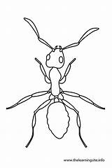 Coloring Bug Pages Outlines Template Ants Potato Butterfly Clip Outline Ant Google Insects Draw Templates Info sketch template