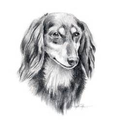 Long Haired Dachshund Dog Drawings
