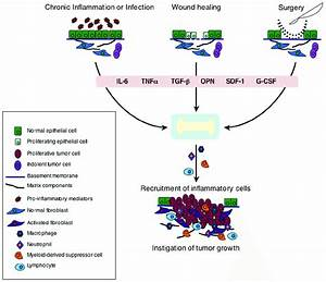 Pathways That Connect Chronic Inflammation  Wound Healing