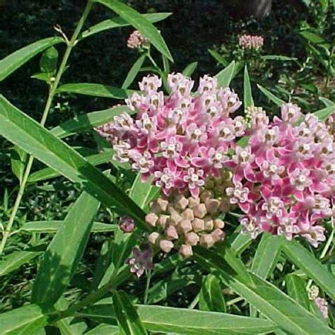 milkweed swamp friends school plant sale