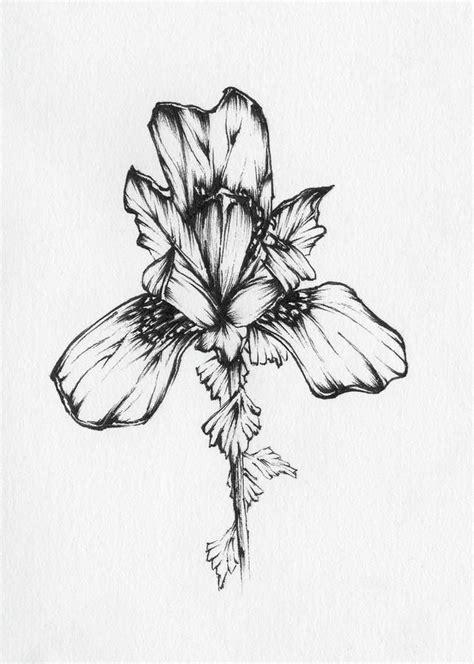 40+ Wonderful Iris Flower Tattoos