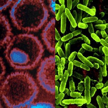 Top 10 Myths And Truths About Viruses And Bacteria Alternative