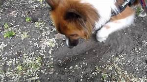 Hund Buddelt Im Beet : alternative belohnung hund buddelt auf signal clickertraining youtube ~ Markanthonyermac.com Haus und Dekorationen