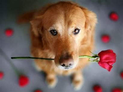 Cute Dogs Wallpapers Desktop 4k