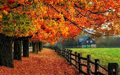 Autumn Desktop Background Fall Backgrounds Tree Examples