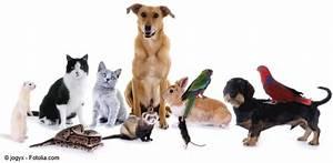 Haustiere Für Kinder : haustier und kind hund katze oder maus was passt am besten dad 39 s house blog ~ Orissabook.com Haus und Dekorationen
