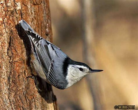 pennsylvania wildlife photographer camera critters