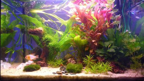 plante pour redonner de la couleur association aquariophilie org