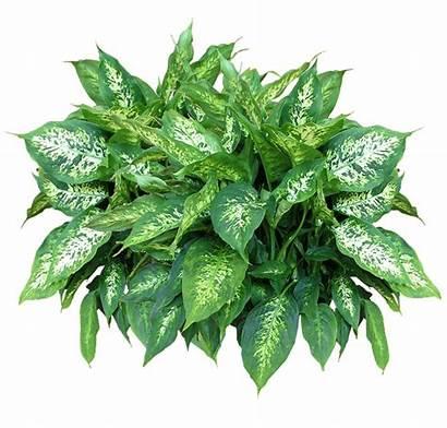 Plants Plant Texture Planting Transparent Clipart Background