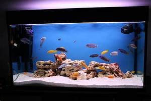 Optimale Aquarium Temperatur : aquarium design ideas best aquarium ideas ~ Yasmunasinghe.com Haus und Dekorationen