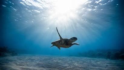 4k Underwater Sea Turtle Skull Wallpapers 2160